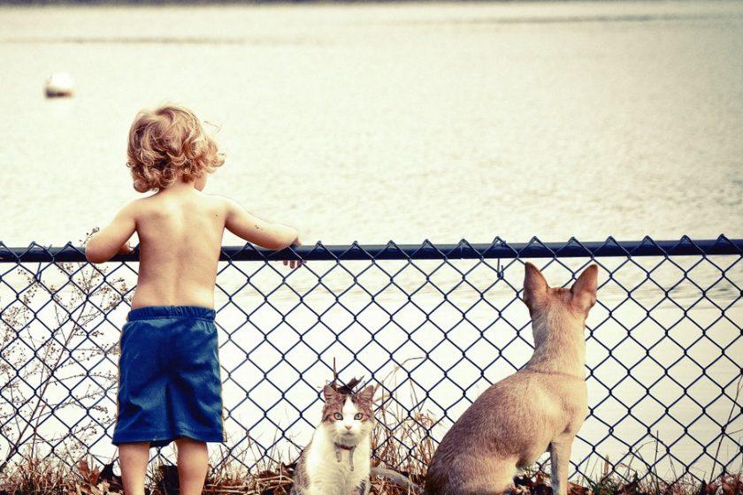 Welches Haustier für mein Kind?